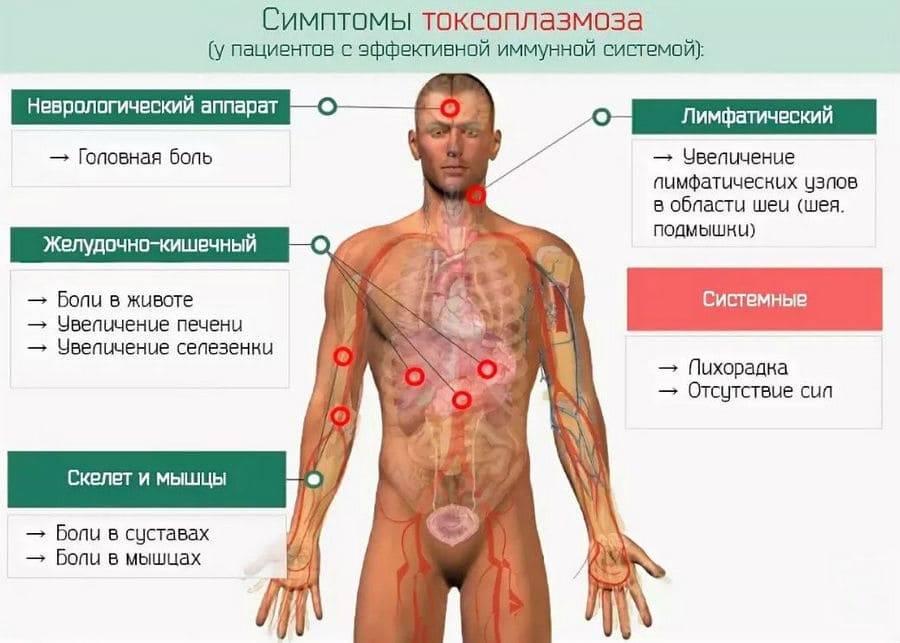 Симптомы и лечение токсоплазмоза у ребенка