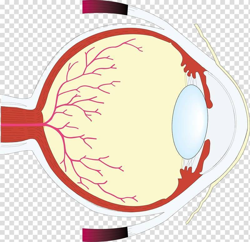 диагностика по сетчатке глаза