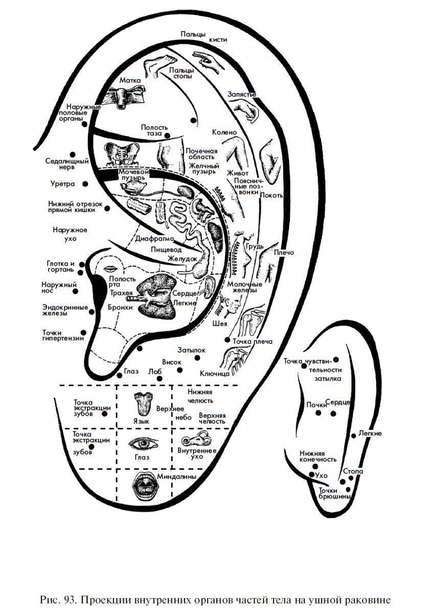 точка на ухе для похудения