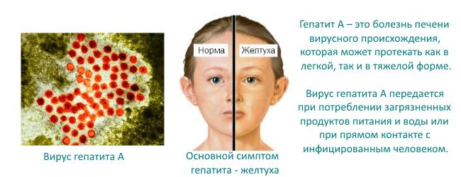 гепатит с передается через