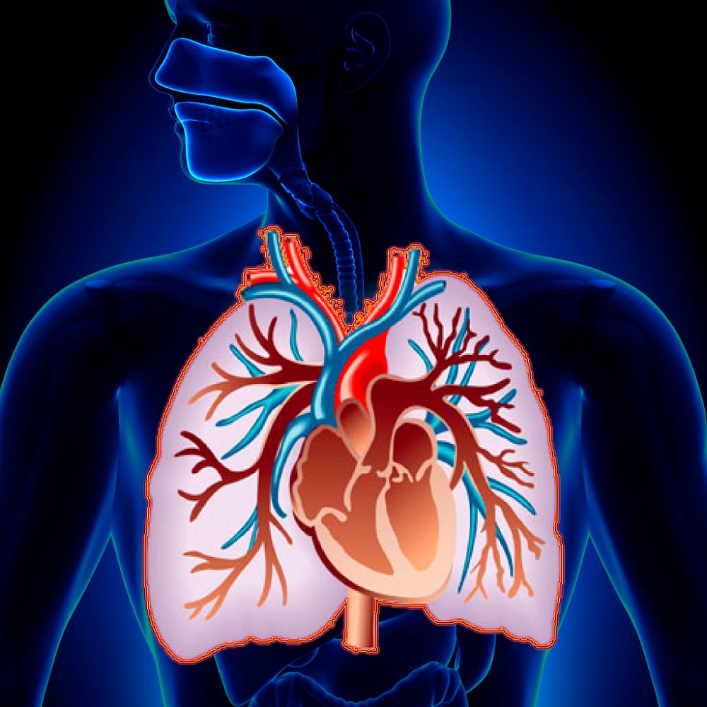Кашель при сердечной недостаточности: симптомы, лечение, диагностика