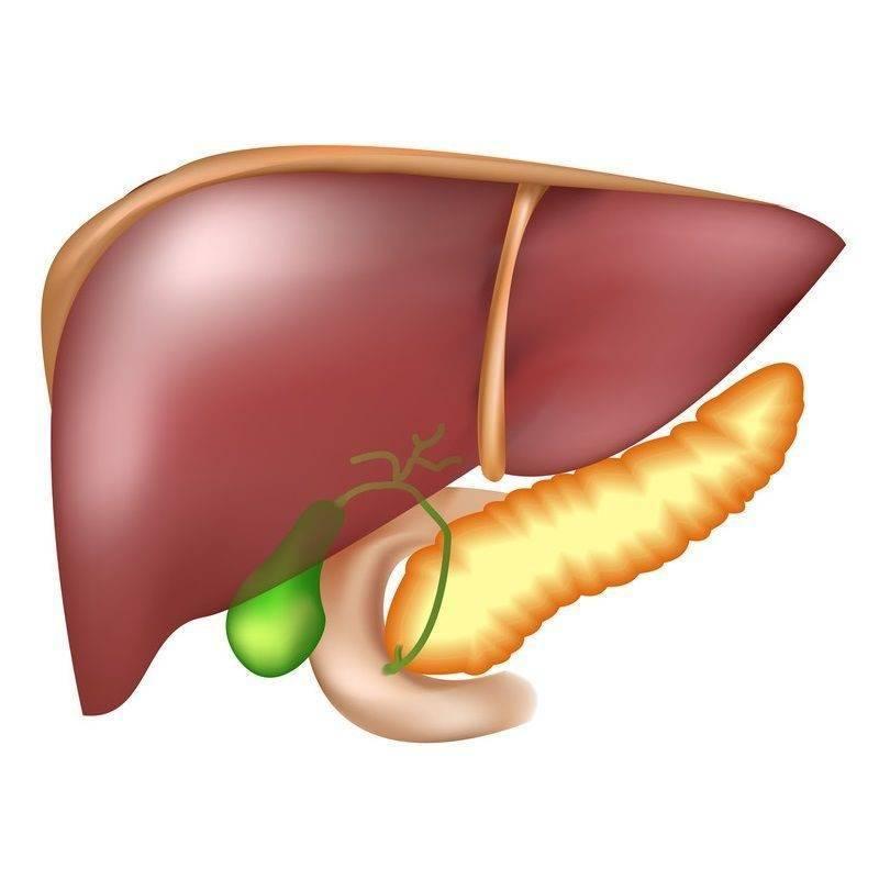 Киста желчного пузыря: симптомы и лечение заболевания