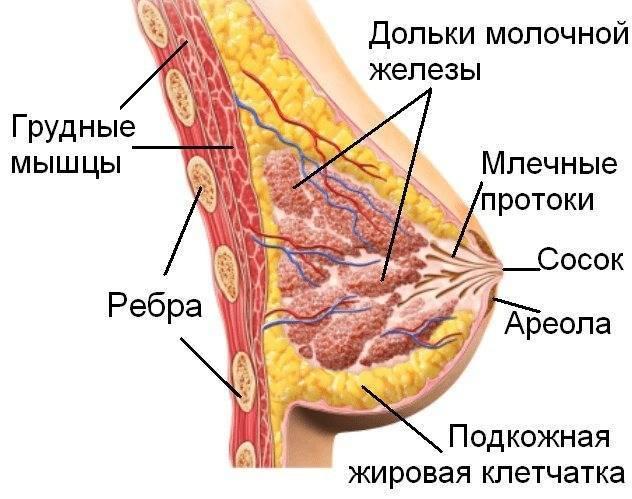 Инволюция молочных желез: причины заболевания, основные симптомы, лечение и профилактика