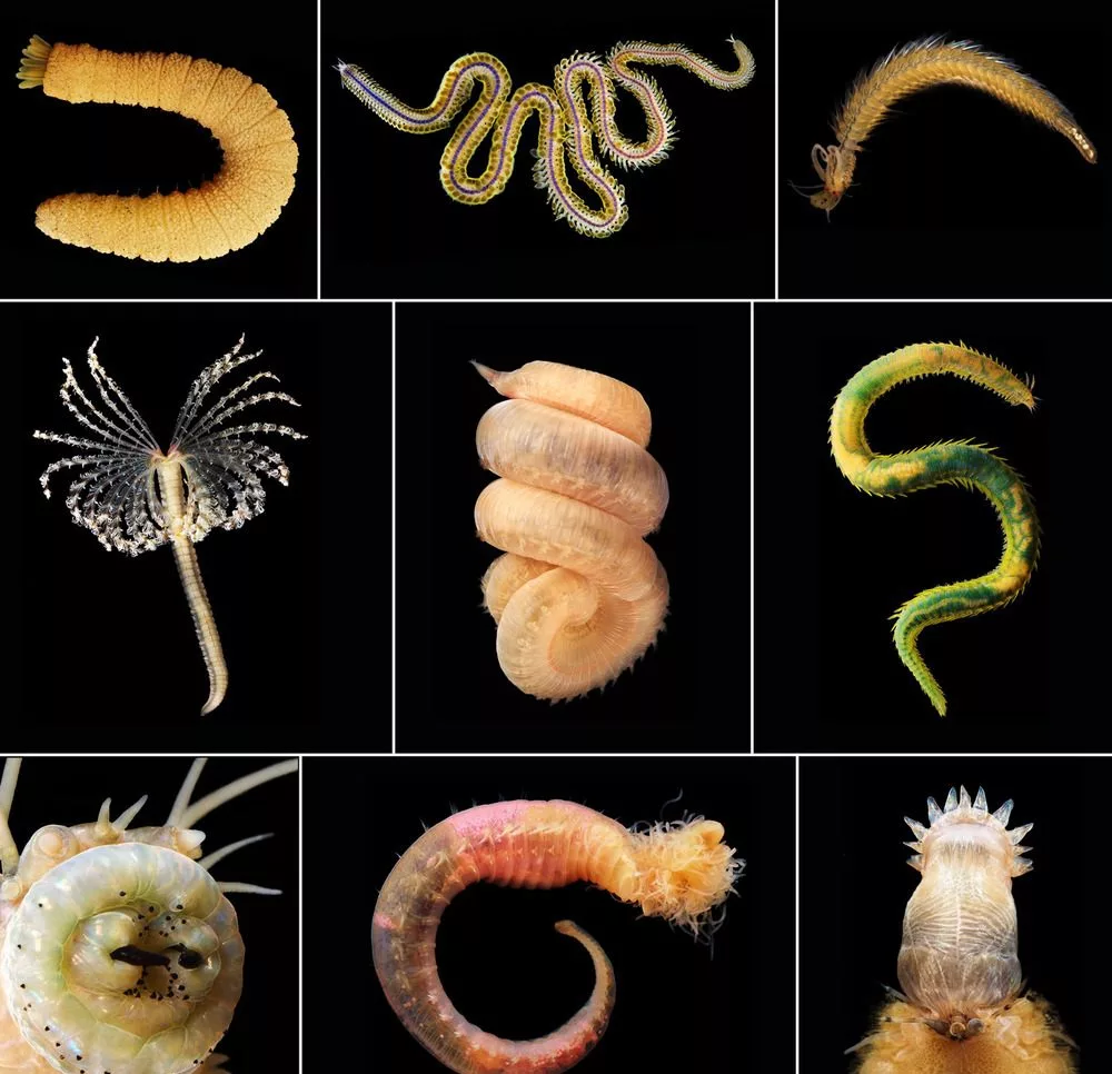 разновидности глистов у человека
