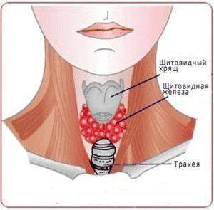 Гипоплазия щитовидной железы: причины возникновения, симптомы и лечение.