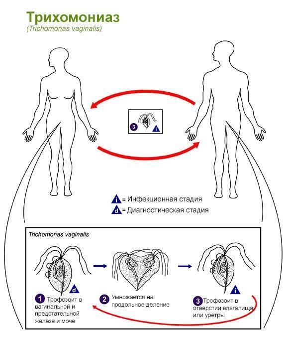можно ли заразиться трихомониазом бытовым путем