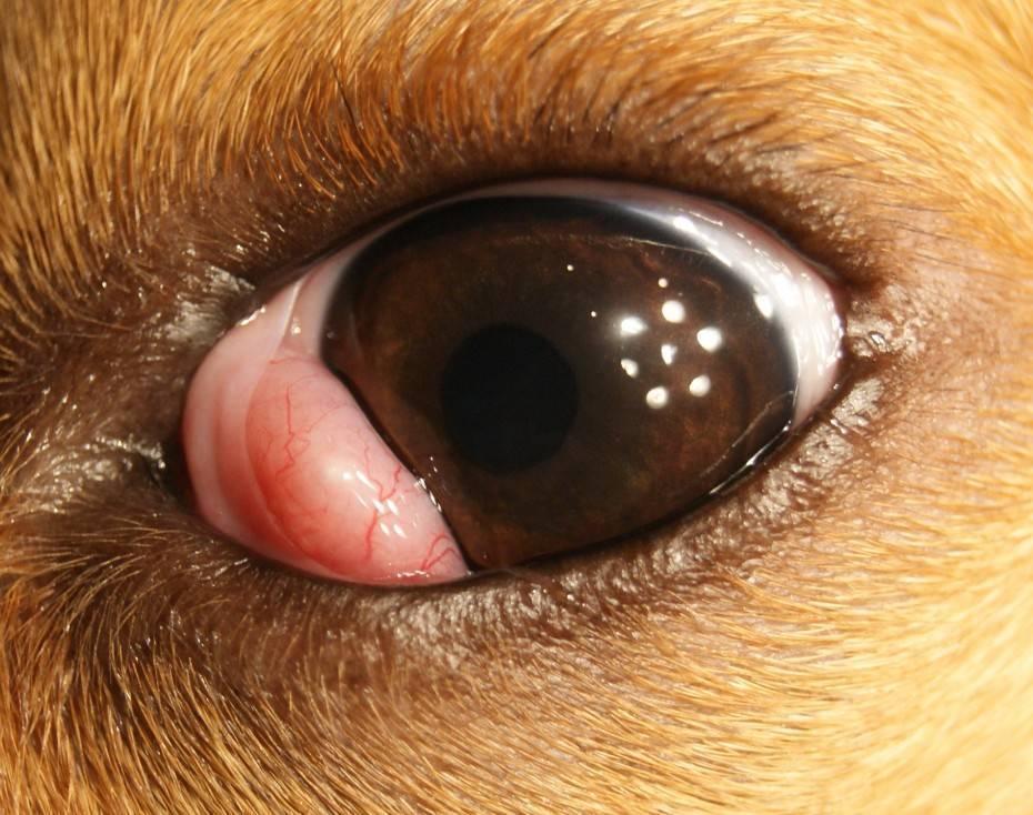 Причины и симптомы воспаления слезного канала. методы лечения воспаления слезного канала