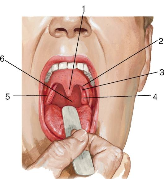 Миндалины в горле
