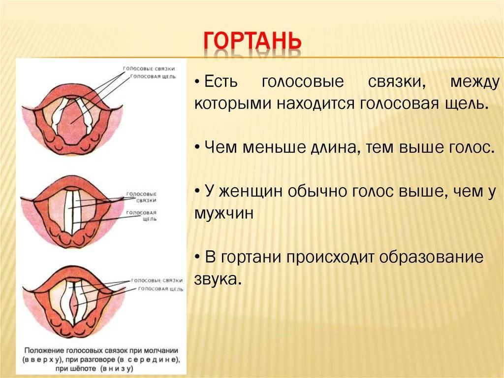 Как лечить связки голосовые. воспаление голосовых связок: симптомы и лечение. охрипший голос - что делать