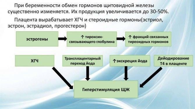 Гестационный гипертиреоз. - запись пользователя елена (id1767975) в сообществе благополучная беременность в категории болезни во время б - babyblog.ru