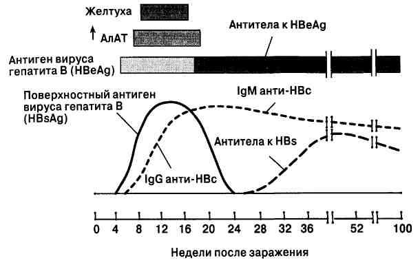 Маркеры гепатита в: что это такое, поверхностный антиген вируса