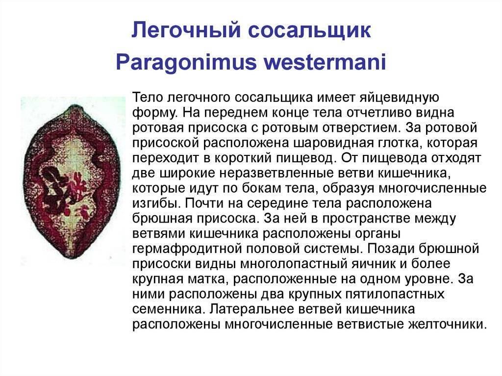 парагонимоз легких
