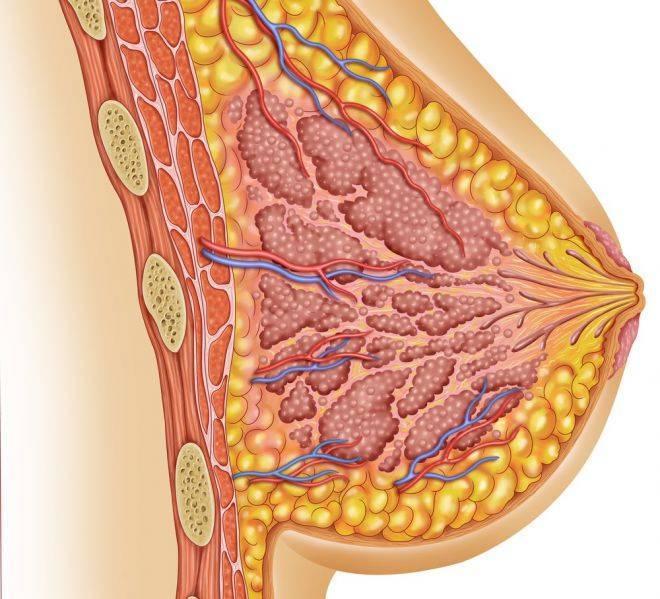 признаки кисты молочной железы