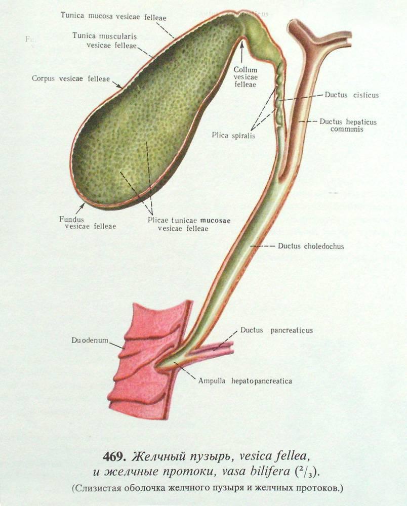 дисфункция желчного пузыря лечение