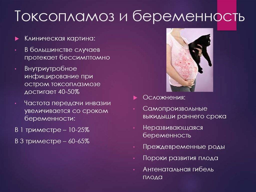 Токсоплазмоз и беременность: симптомы токсоплазмоза, профилактика и лечение во время беременности. / mama66.ru