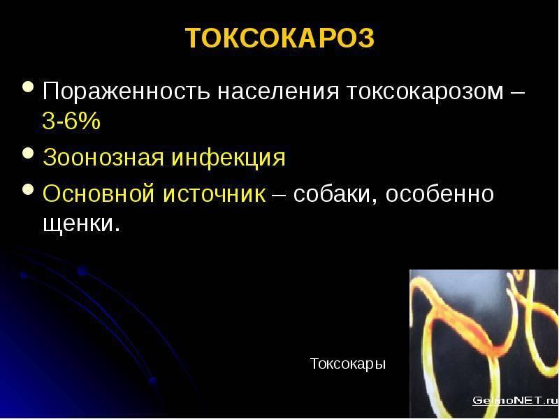 Токсокароз: симптомы, лечение, диагностика и профилактика