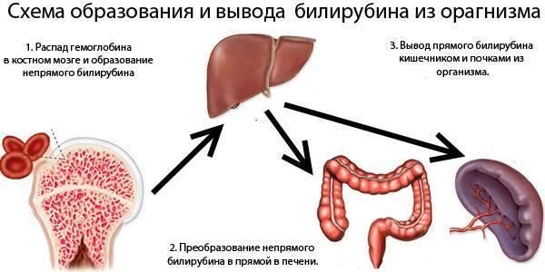 Гипербилирубинемия - что это такое? диагностика, причины синдрома