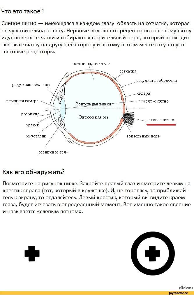 слепое пятно в глазу у человека