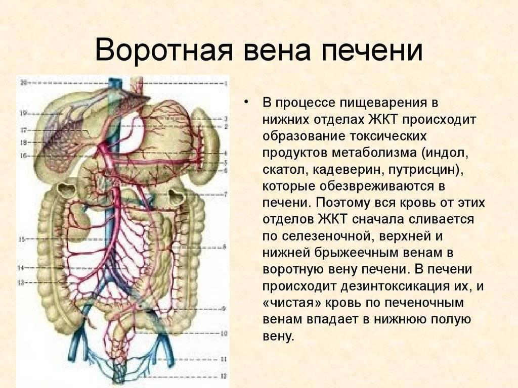 тромбоз воротной вены печени
