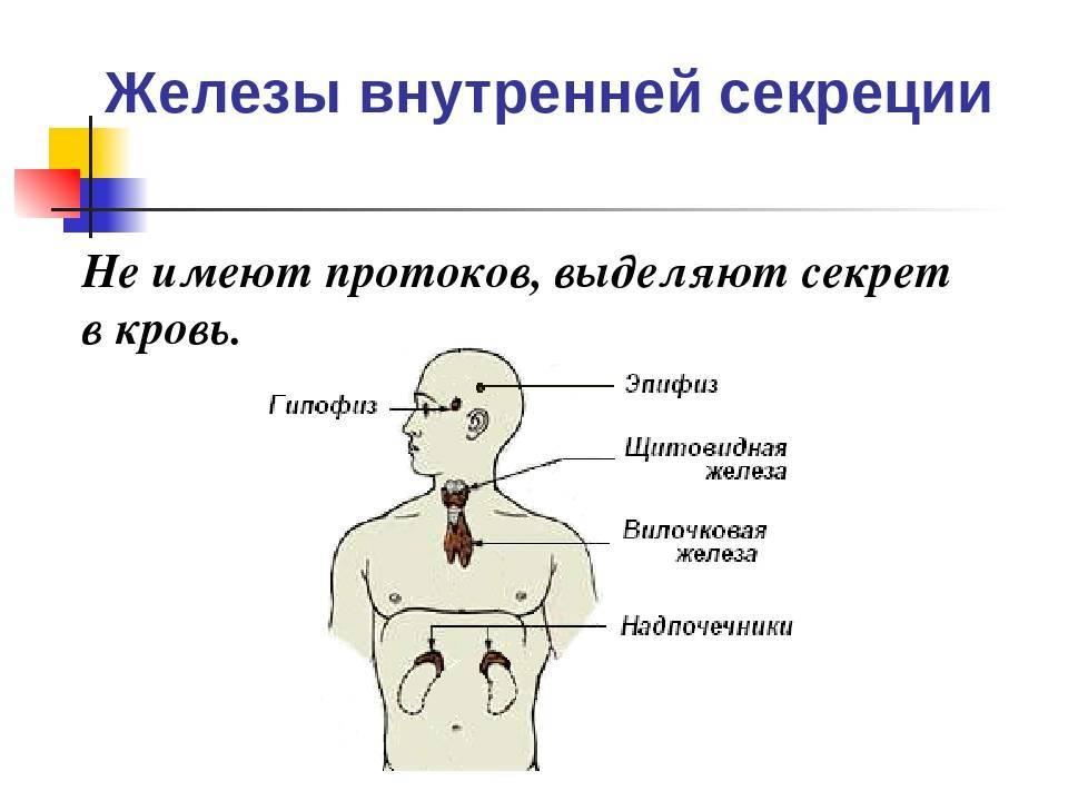 нарушение эндокринной системы симптомы