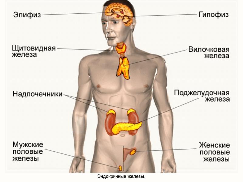 Виды диагностики эндокринной системы в ярославле: цены, адреса и запись онлайн