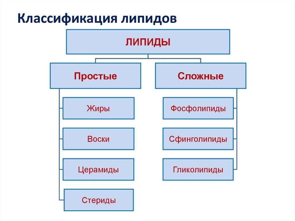 простые липиды их классификация