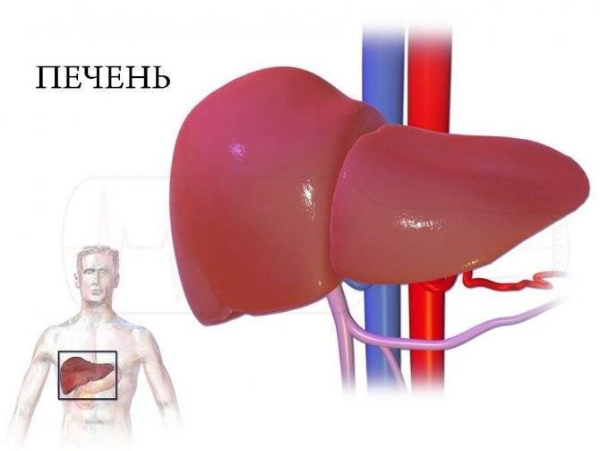 Жировой гепатоз – что это такое? стеатоз печени – симптомы, лечение
