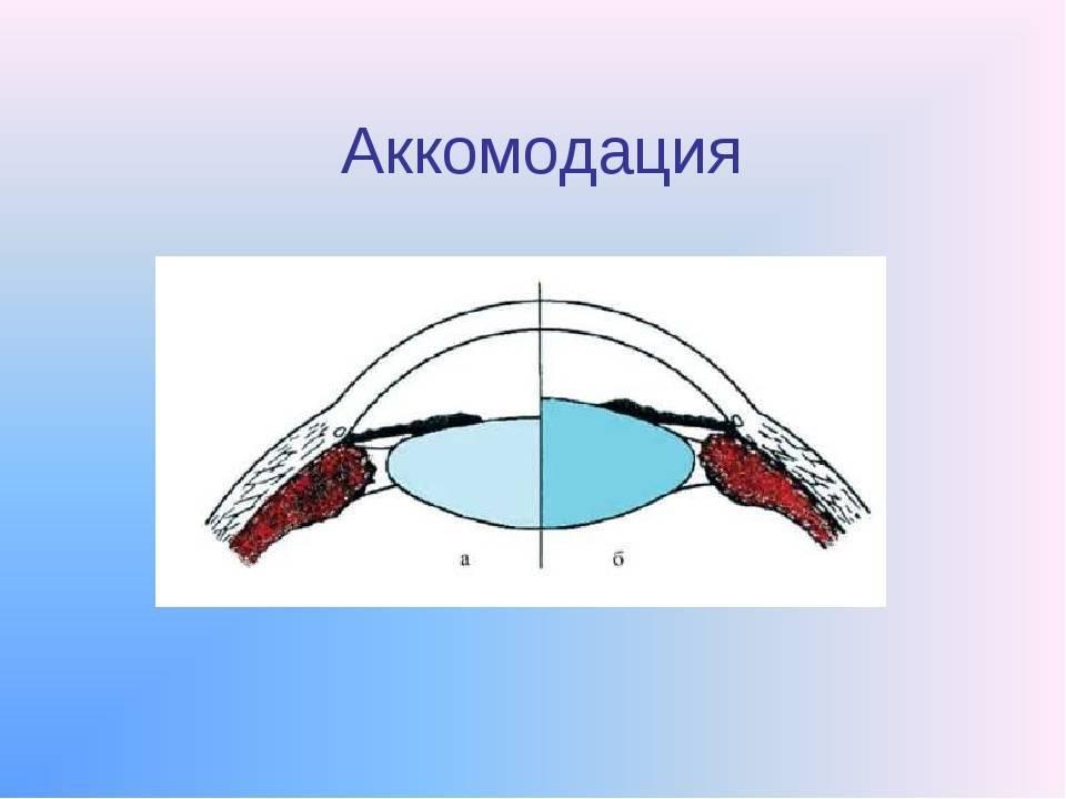 Аккомодация (биология) — википедия. что такое аккомодация (биология)