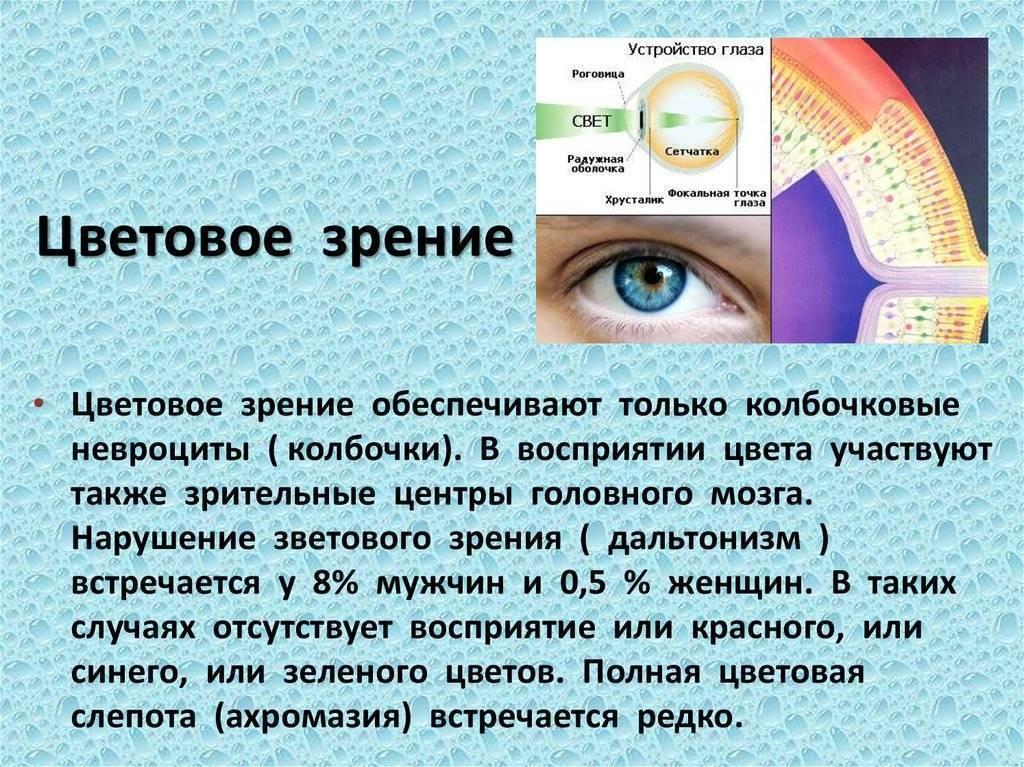 Зрение — большая медицинская энциклопедия