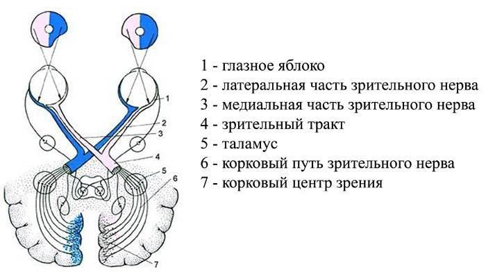 Причины, симптомы и лечение атрофии зрительного нерва