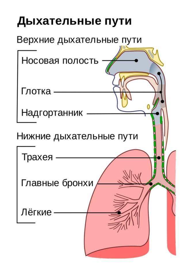 как вылечить охрипшее горло за 1 день