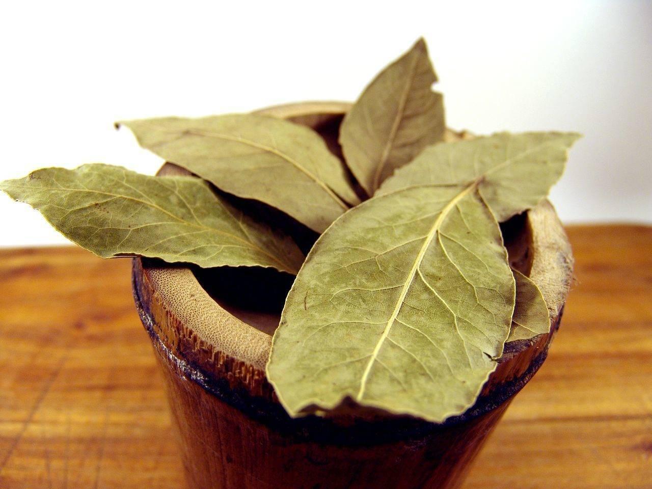 лечение гайморита лавровым листом