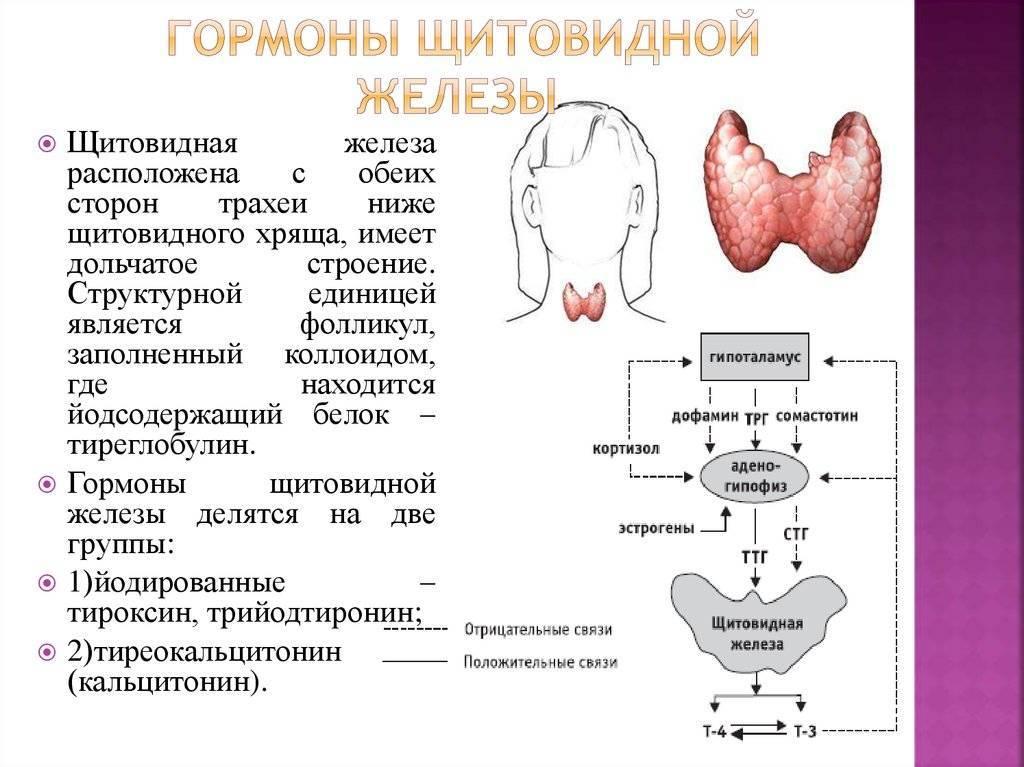 гормоны щитовидки повышены