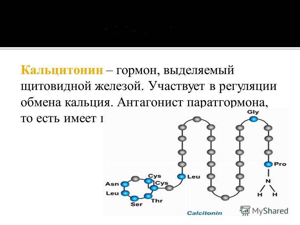 тиреокальцитонин функции