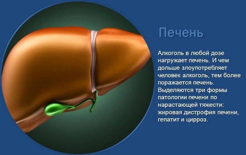 Влияние алкоголя на организм человека. влияние алкоголя на печень: вред от алкоголя, возможные заболевания, симптомы, лечение и восстановление печени