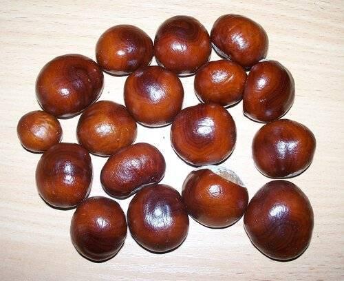 Лечебные свойства каштана при гайморите