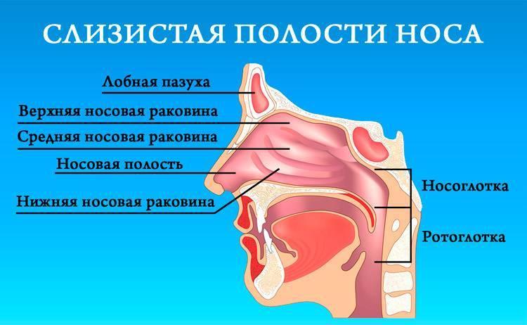 сухость в носоглотке