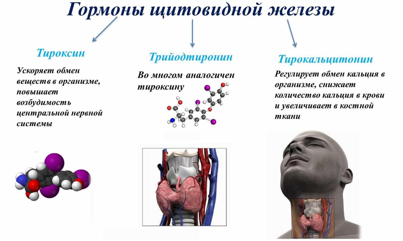 Что значит повышенный и пониженный уровень тиреотропного гормона?