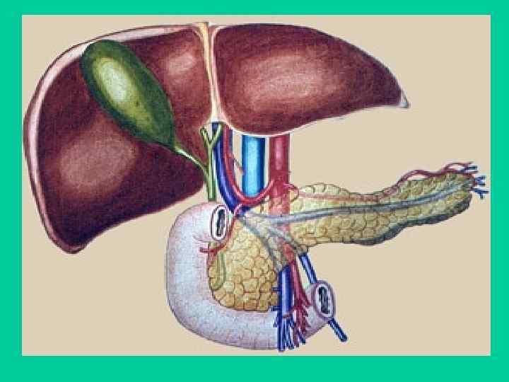 Лечение дискинезии желчного пузыря у взрослых по гипомоторному и гипермоторному типу