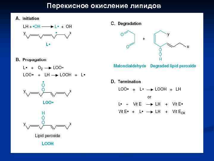 окисление белков липидов