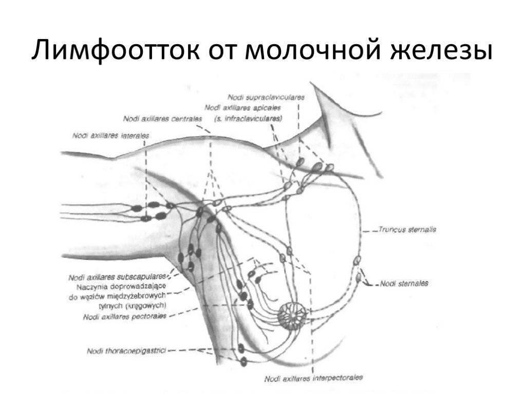 Лимфоузлы при мастопатии: причины заболевания