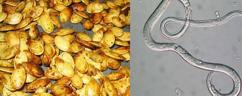 семена тыквы от глистов применение