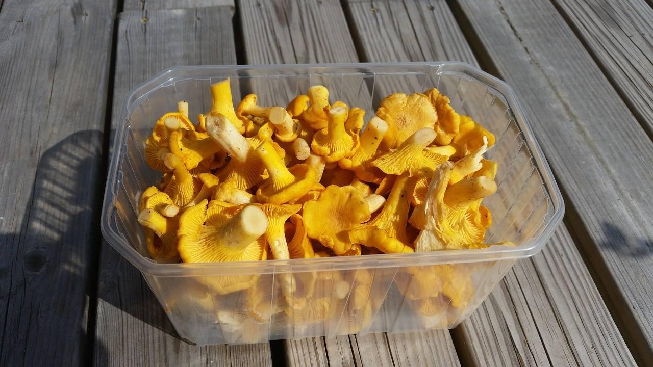 Сушеные лисички от паразитов - рецепты для лечения. отзывы о применении грибов от паразитов