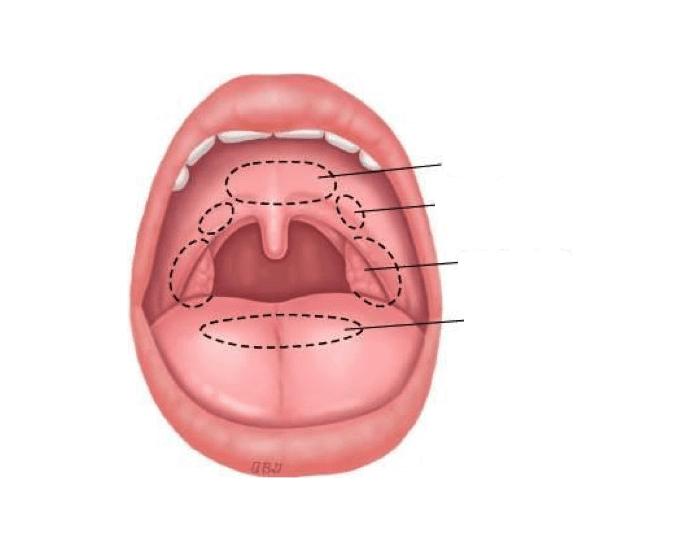 Как выглядит здоровое горло у ребенка, а как – больное?