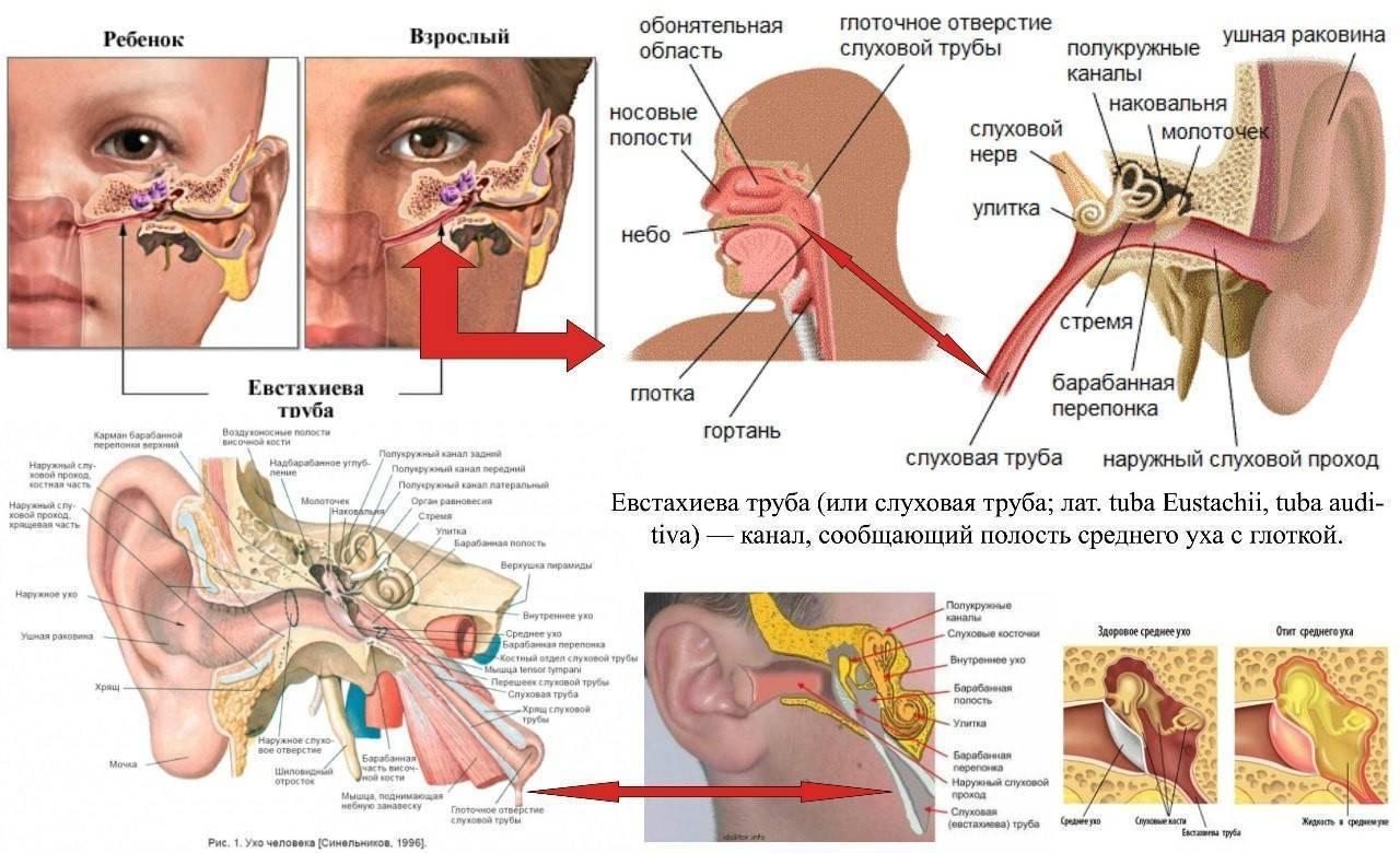 Как остановить насморк быстро течет из носа