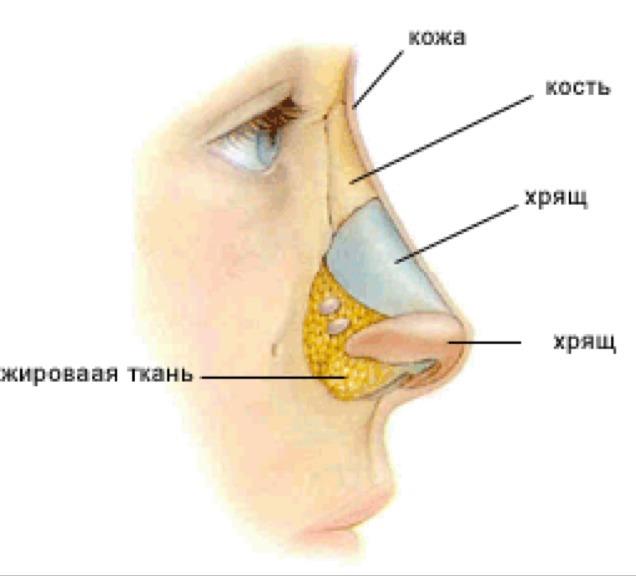 Рисуем нос человека