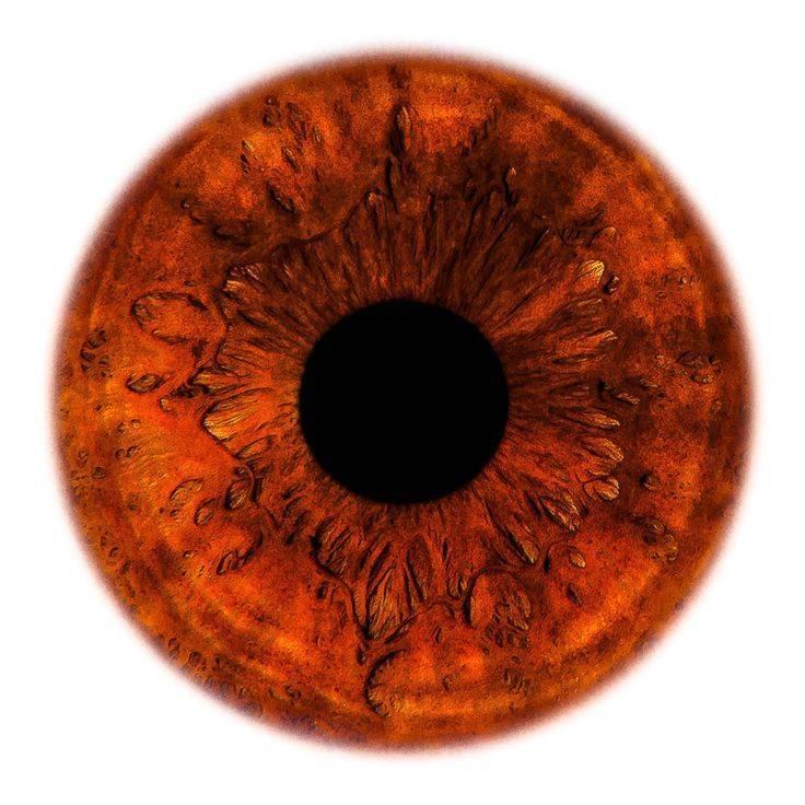 Радужка глаза: строение, функции, лечение