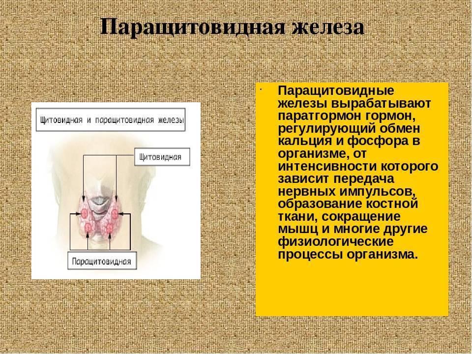 Анализ гормонов щитовидной и паращитовидной желез