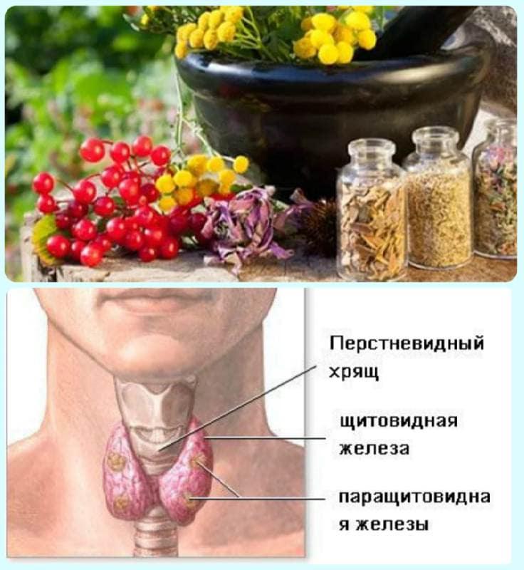 народное лечение щитовидной железы