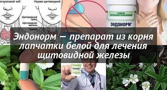 Корни лапчатки белой лечение щитовидной железы эндонорм где купить